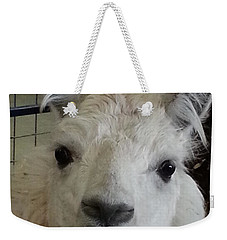 Weekender Tote Bag featuring the photograph Who Me Llama by Caryl J Bohn