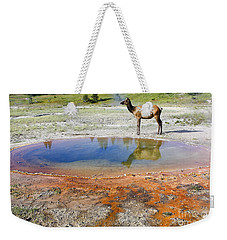 Wild And Free In Yellowstone Weekender Tote Bag by Teresa Zieba