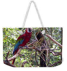 Weekender Tote Bag featuring the photograph Wild Hawaiian Parrot  by Joseph Baril