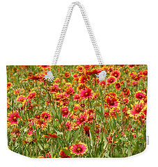Weekender Tote Bag featuring the photograph Wild Red Daisies #1 by Robert ONeil
