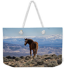 Wild Stallion Of Sand Wash Basin Weekender Tote Bag