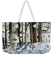 Weekender Tote Bag featuring the photograph Winter Arctic Wolf by Wolves Only