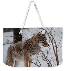 Winter Coyote Weekender Tote Bag