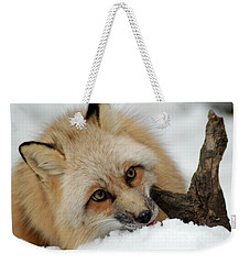 Winter Fox 2 Weekender Tote Bag by Richard Bryce and Family