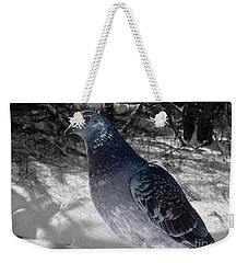 Weekender Tote Bag featuring the photograph Winter Pigeon by Nina Silver