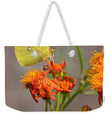 Weekender Tote Bag featuring the photograph Yellow Sulphur Butterfly by Debra Martz