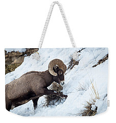 Weekender Tote Bag featuring the photograph Yellowstone Bighorn by Michael Chatt