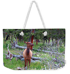Yellowstone Moments. Doe Weekender Tote Bag