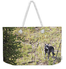 Weekender Tote Bag featuring the photograph Yellowstone Wolf by Belinda Greb