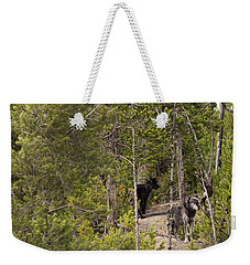 Weekender Tote Bag featuring the photograph Yellowstone Wolves by Belinda Greb