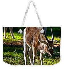 Youngster Addax Weekender Tote Bag by Miroslava Jurcik