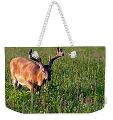 Weekender Tote Bag featuring the photograph Young Buck by Eleanor Abramson