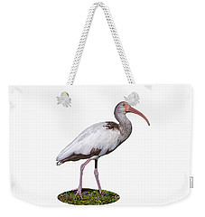 Weekender Tote Bag featuring the photograph Young Ibis Gazing Upwards by John M Bailey