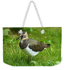 Young Lapwing Weekender Tote Bag