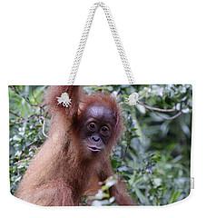 Young Orangutan Kiss Weekender Tote Bag