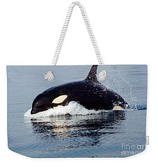Weekender Tote Bag featuring the photograph Young Orca Off The San Juan Islands Washington 1986 by California Views Mr Pat Hathaway Archives