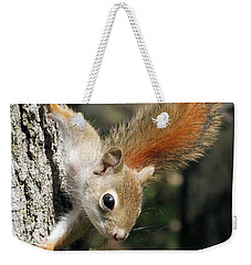 Young Red Squirrel Weekender Tote Bag