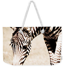 Zebra Foal Sepia Tones Weekender Tote Bag