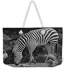 Weekender Tote Bag featuring the photograph Zebra In Black And White by Kate Brown