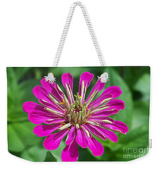 Weekender Tote Bag featuring the photograph Zinnia Opening by Eunice Miller