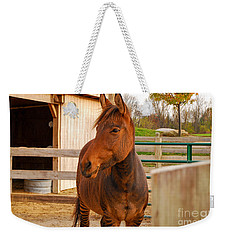 Zorse Weekender Tote Bag by Mary Carol Story