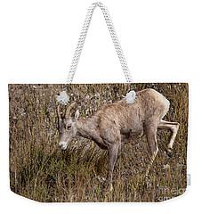 Bighorn Ewe Weekender Tote Bag
