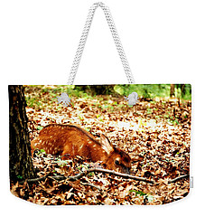 Weekender Tote Bag featuring the photograph  Sweet Baby Elk by Peggy Franz