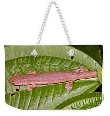 Bolitoglossine Salamander Weekender Tote Bag by Dante Fenolio