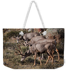 Mule Deer Bucks Weekender Tote Bag