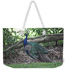 Weekender Tote Bag featuring the photograph Peacock by Donna  Smith