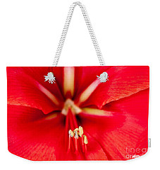 Weekender Tote Bag featuring the photograph Red Amaryliss by Les Palenik