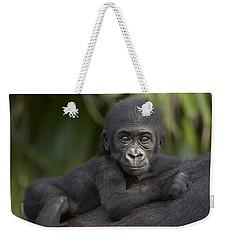 Western Lowland Gorilla Gorilla Gorilla Weekender Tote Bag by San Diego Zoo