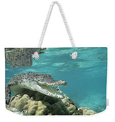 Saltwater Crocodile Crocodylus Porosus Weekender Tote Bag by Mike Parry