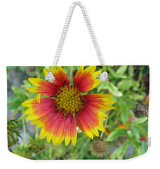 Weekender Tote Bag featuring the photograph A Beautiful Blanket Flower by Ashish Agarwal