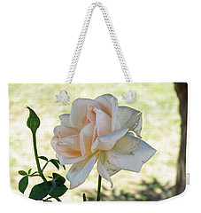 Weekender Tote Bag featuring the photograph A Beautiful White And Light Pink Rose Along With A Bud by Ashish Agarwal