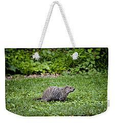 A Groundhog Marmota Monax Enjoys A Meal Weekender Tote Bag