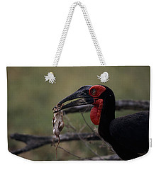 A Southern Ground Hornbill Prepares Weekender Tote Bag