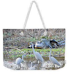 Weekender Tote Bag featuring the photograph Alligator Looking For Food by Dan Friend