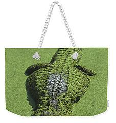 American Alligator Alligator Weekender Tote Bag by Heidi & Hans-Juergen Koch