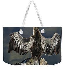 An American Anhinga Dries Its Wings Weekender Tote Bag