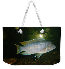 Weekender Tote Bag featuring the photograph Aquarium Life by Bonfire Photography