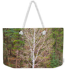Aspen Tree Forest Road 249 Weekender Tote Bag