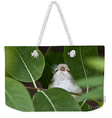 Baby Bird Peeping In The Bushes Weekender Tote Bag by Jeannette Hunt