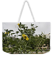 Weekender Tote Bag featuring the photograph Beautiful Yellow Flower In A Garden by Ashish Agarwal
