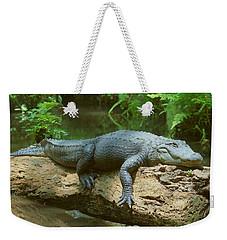 Big Gator On A Log Weekender Tote Bag by Myrna Bradshaw