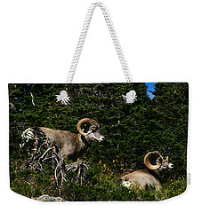 Big Horn Sheep Glacier National Park Weekender Tote Bag
