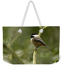 Black-capped Chickadee With Branch Bokeh Weekender Tote Bag