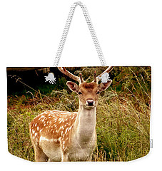 Weekender Tote Bag featuring the photograph Wildlife Fallow Deer Stag by Linsey Williams