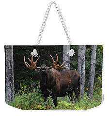 Weekender Tote Bag featuring the photograph Bull Moose Flehmen by Doug Lloyd