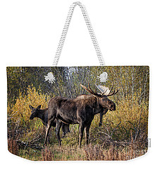 Bull Tolerates Calf Weekender Tote Bag by Ronald Lutz